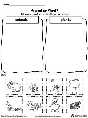 kindergarten plants and animals printable worksheets. Black Bedroom Furniture Sets. Home Design Ideas