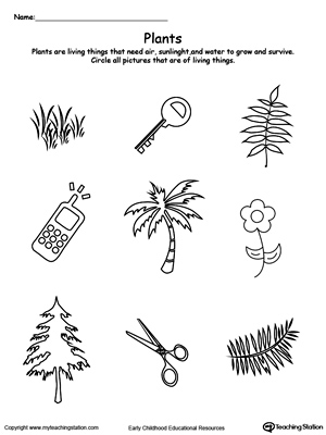 Understand Living Things: Plants